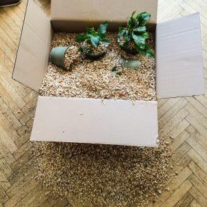 Pflanzen Lieferung von Arche Noah
