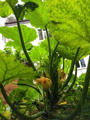 Zucchini inside