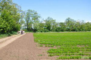 Hinter dem Karottenfeld wohnen die Spargel