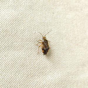Käfer 4 N.N.